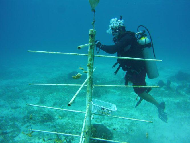 corales1-667x500.jpg