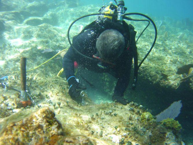 corales3-667x500.jpg